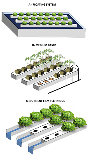 Hydroponic systems and water management in aquaponics: A review